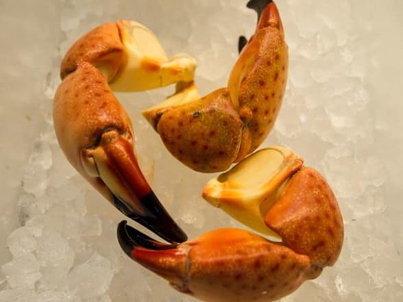 Stone Crab Claws – Medium For Sale