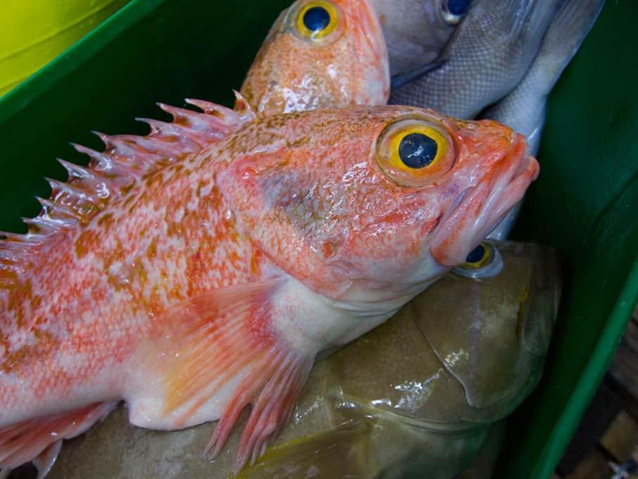 Rose fish fillets order fresh fish online for Fresh fish online