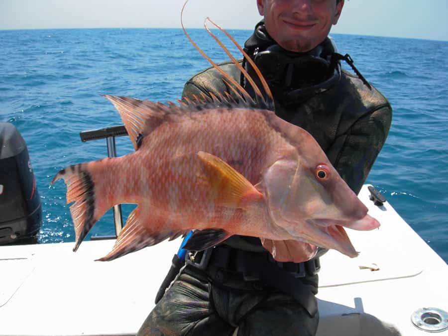 Fresh fish price per pound archives eaton street for Fish stocking prices